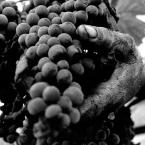 Castellani -L'Anima del Vino