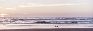 Fine art photography of a dog running in front of the ocean in alentejo, south Portugal