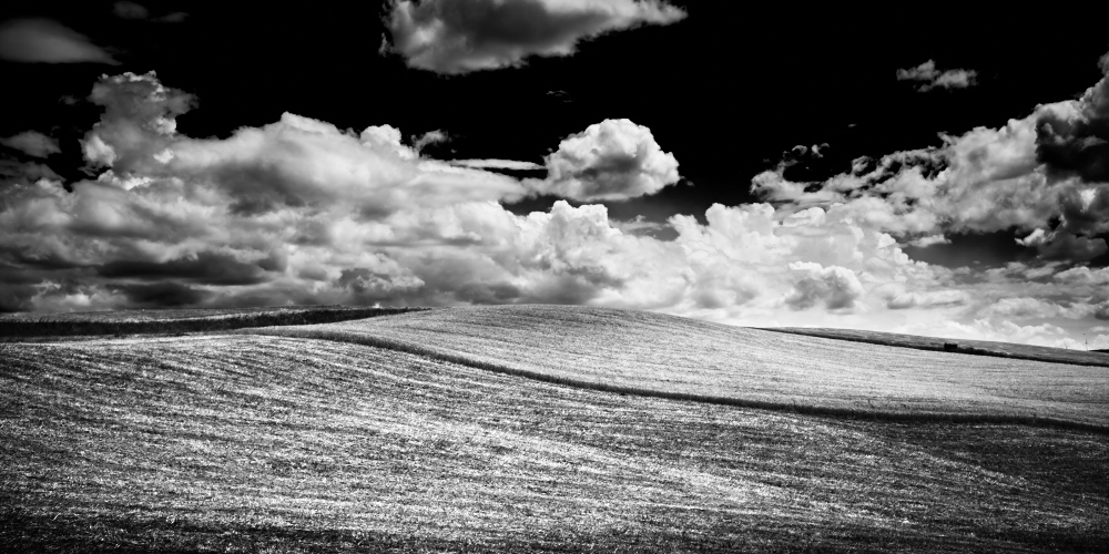 Fine art black and white photography of Wheat blowing up on a hill