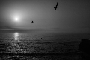 Fine art photography in black and white of Praia do Malhao in Alentejo Portgual. two seagulls flying in front of an ocean like a romantic fine art painting