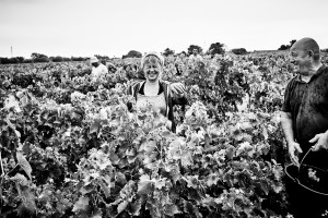 fine art image in black and white of the harvest of Muscat in France