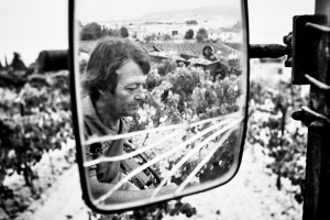 harvest of Muscat, France in Frontignan.black and white fine art and documentary photo